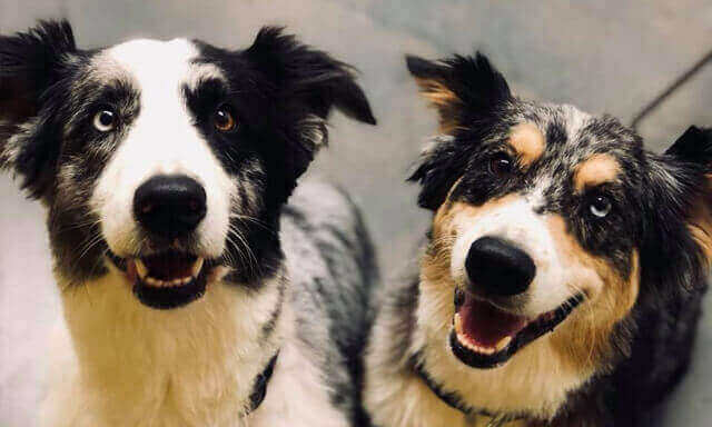 A happy pair of canine patients